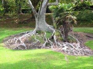 Western Park tree 300x225 Walks in Auckland   Victoria Park and Markets
