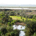 Te Atatu Peninsula © 2011-2013 Unleashed Ventures Limited