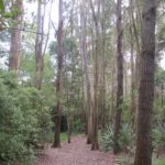 Waiatarua Reserve © 2011-2013 Unleashed Ventures Limited