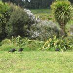 Waiatarua Reserve © 2011-2013 Unleashed Ventures Limited