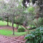Hobson Bay Walkway and ParnellCopyright 2014 Unleashed Ventures Limited