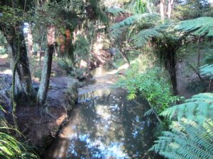 Puhinui Stream 300x225 Botanic Gardens and Totara Park Loops