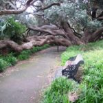 Auckland Art Gallery Loop Walk © 2011-2013 Unleashed Ventures Limited