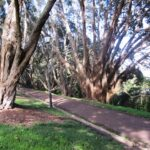 Auckland Domain trees 150x150 Walks in Auckland City