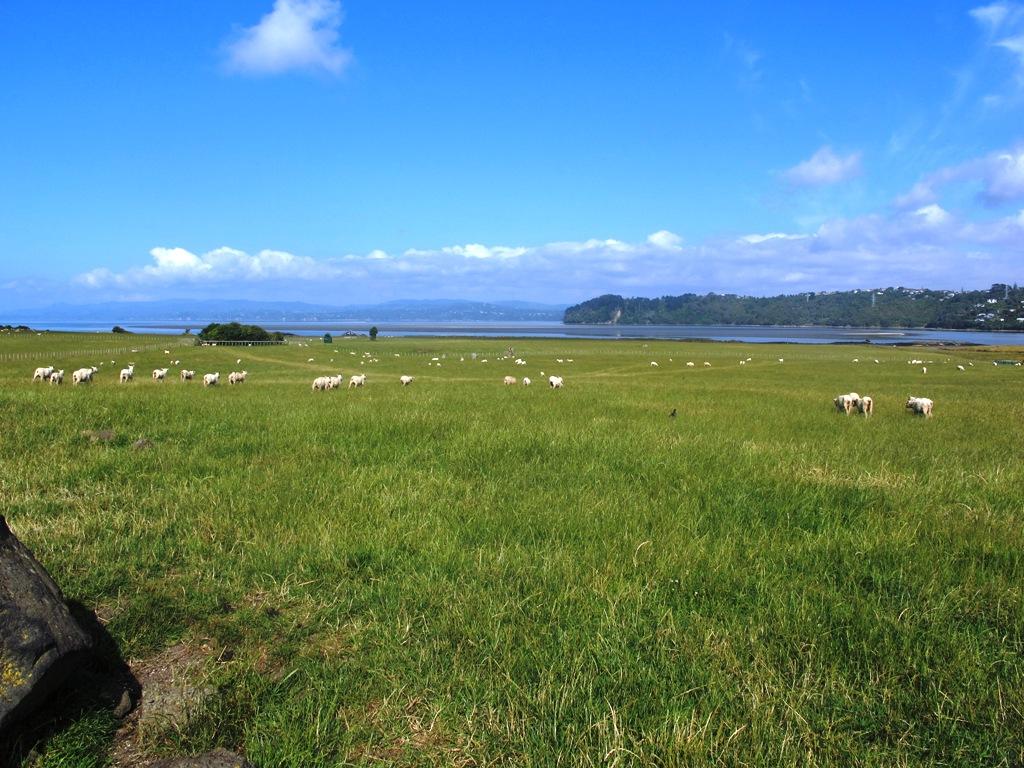Ambury Park Farm