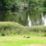 Maybury Reserve