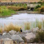 Maungarei Springs Wetlands