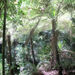 St Johns Bush native ferns