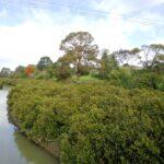 Otara Creek Walkway