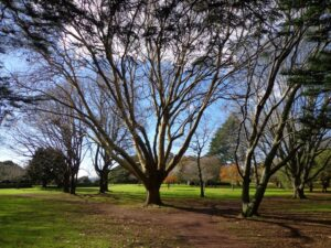 Cornwall Park © 2011-2013 Unleashed Ventures Limited