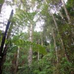 Copy of DSC00568 150x150 Bayview Giant Kauri Walk