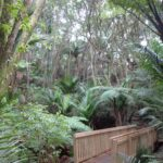 Copy of DSC00569 150x150 Bayview Giant Kauri Walk