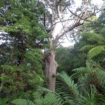 Giant Kauri Lynn Reserve © 2011-2013 Unleashed Ventures Limited