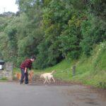 Orakei Basin Walkway © 2011-2013 Unleashed Ventures Limited