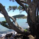 Maraetai and Omana loop walk © 2011-2014 Unleashed Ventures Limited All Rights Reserved