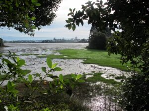 Papakura Estuary Walk Copyright Unleashed Ventures Limited 2014