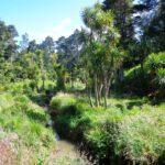 A bush walk on Auckland's North Shore
