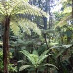 A bush walk on Auckland's North Shore