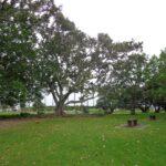 Seaside Park, Otahuhu