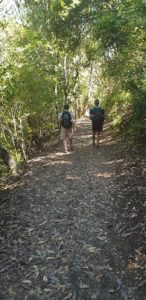 Walking through native bush on  Rangitoto Island