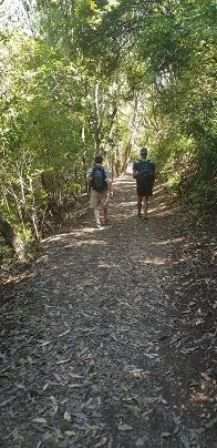Walking through native bush on Rangitoto Island
