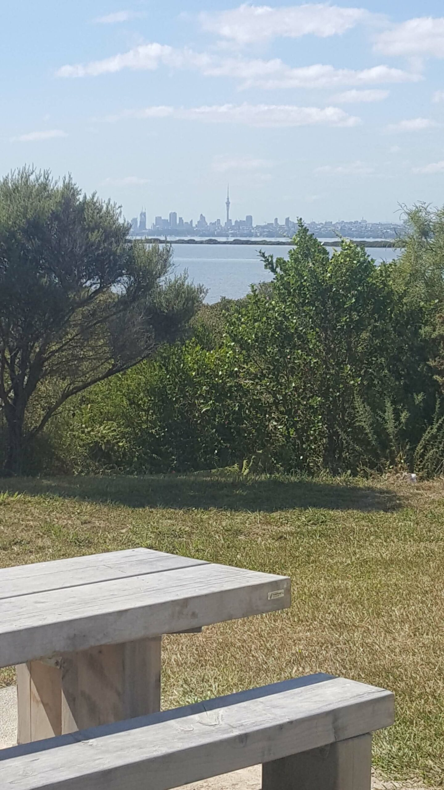 Have a picnic with a view to Auckland City