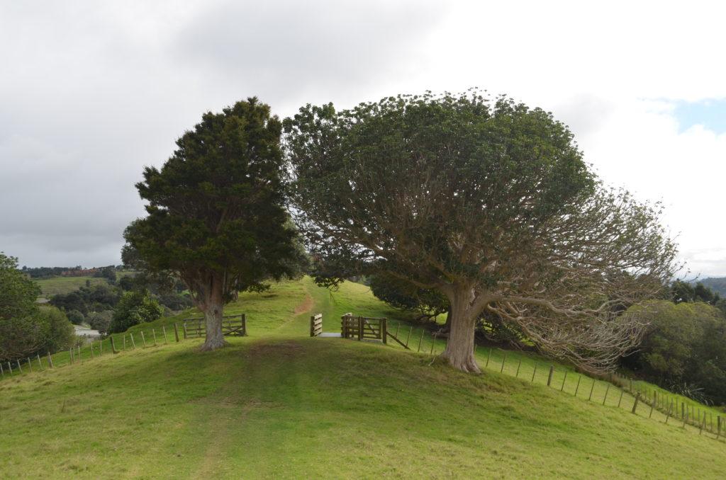 Ridgetop grass track in Mahurangi Regional Park