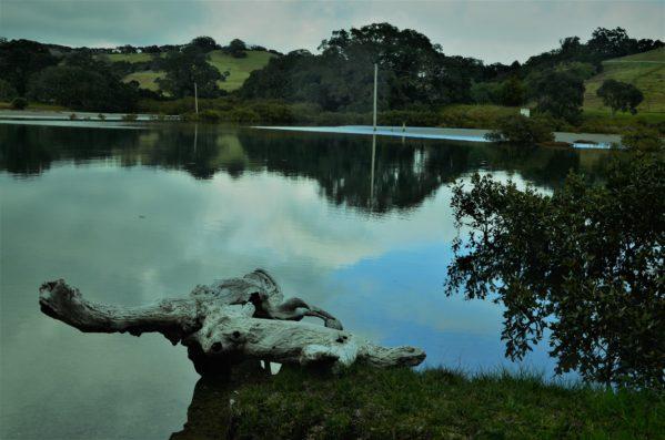 Mirror views on the Te Muri Esturary
