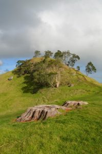 Mangere Mountain grass track to summit
