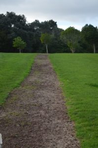 wide path with grass