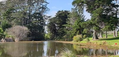 Rosedale Park duck pond