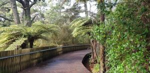 Boardwalk in native bush