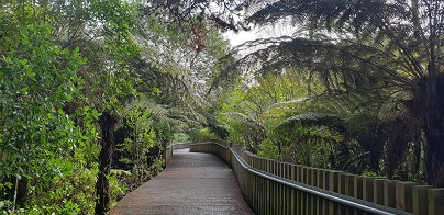Unsworth Heights boardwalk through stunning NZ native bush