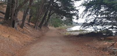 Whitford Beach Track