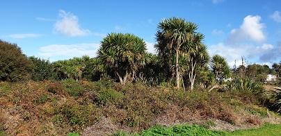 Kohuroa Park Native Bush and Birds