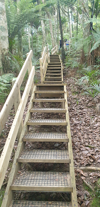 Stairway to Heaven in Aucklands Clevedon Reserve